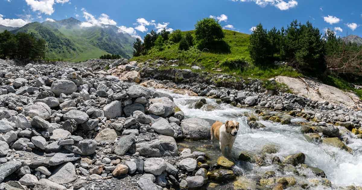Ortozyurek river.